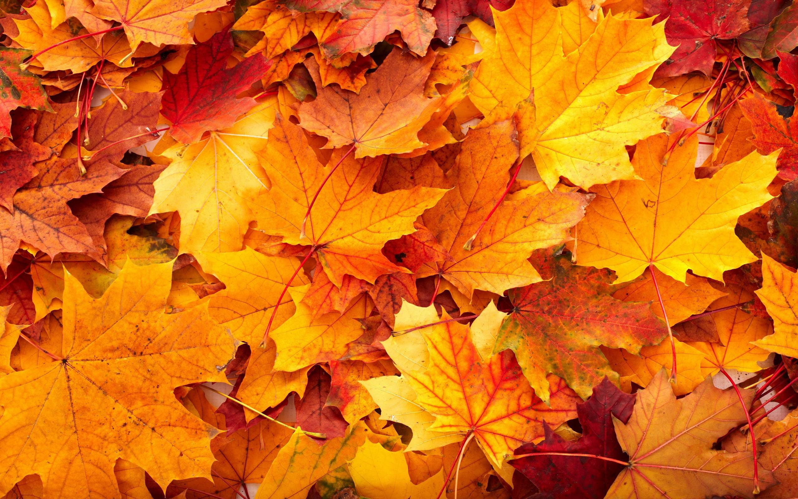 autumn leaves background 43 pictures
