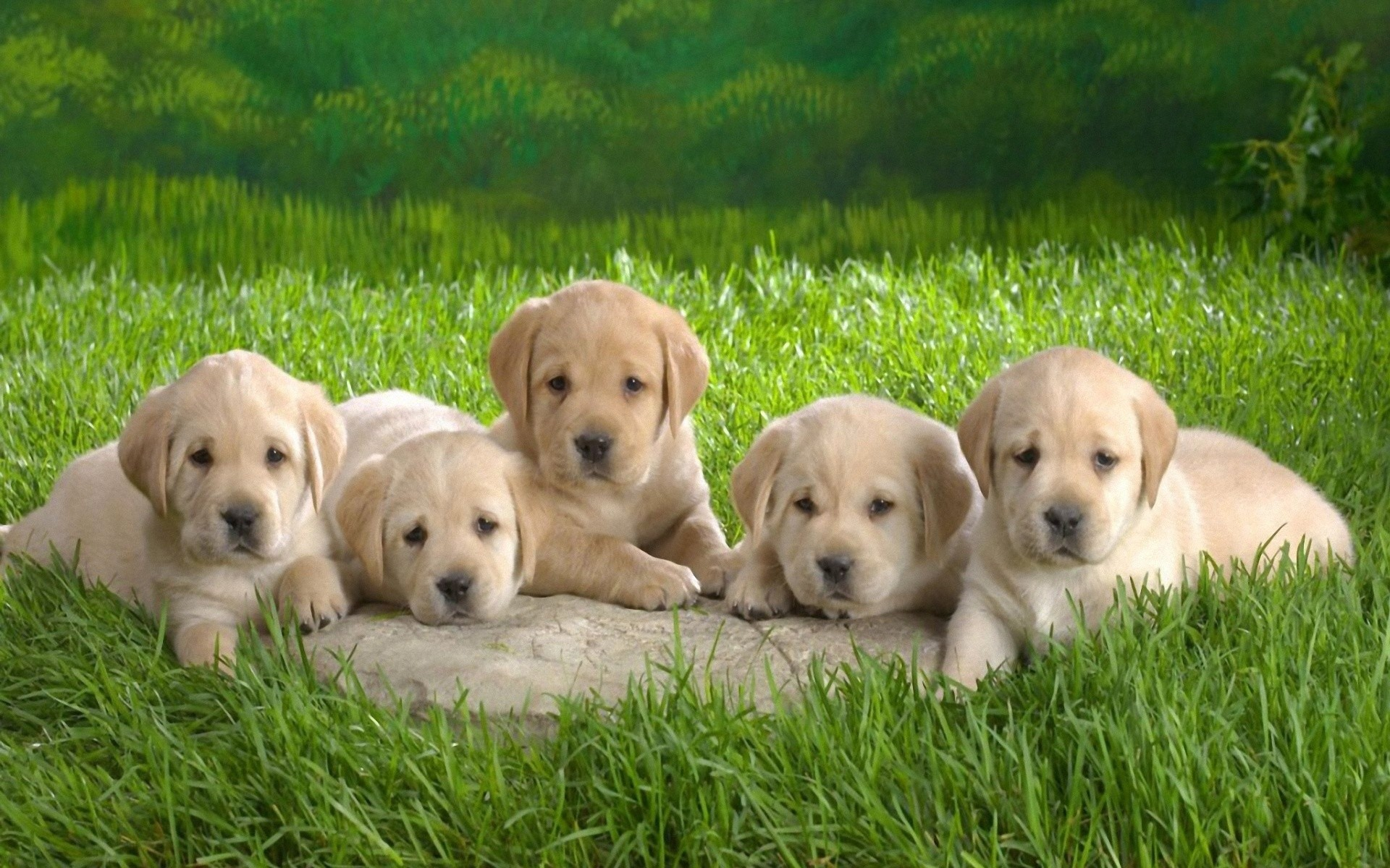 Cute Puppy Desktop Wallpaper 53 Pictures