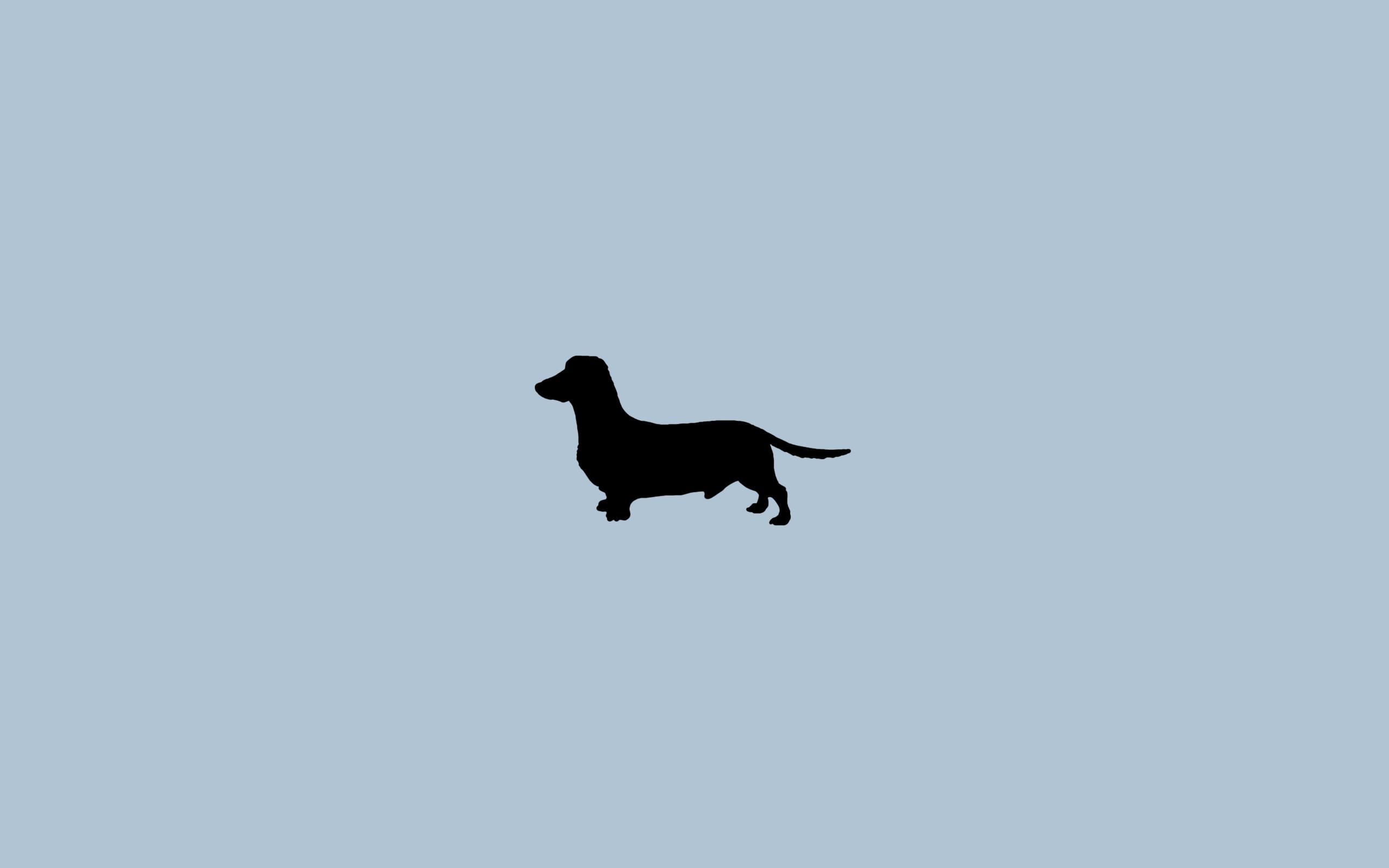 Weiner Dog Wallpaper 60 Pictures