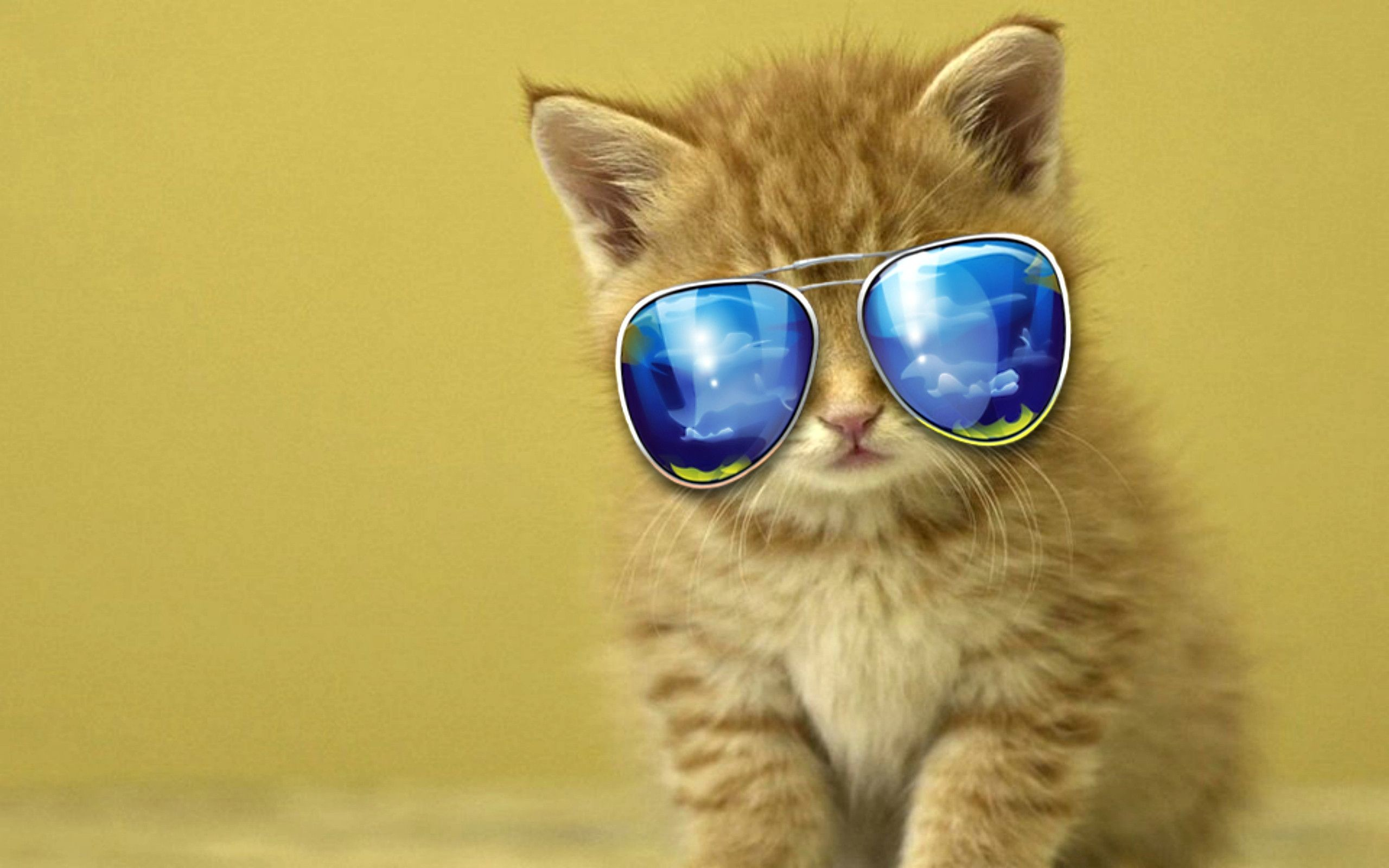 cool cat backgrounds 2560x1600