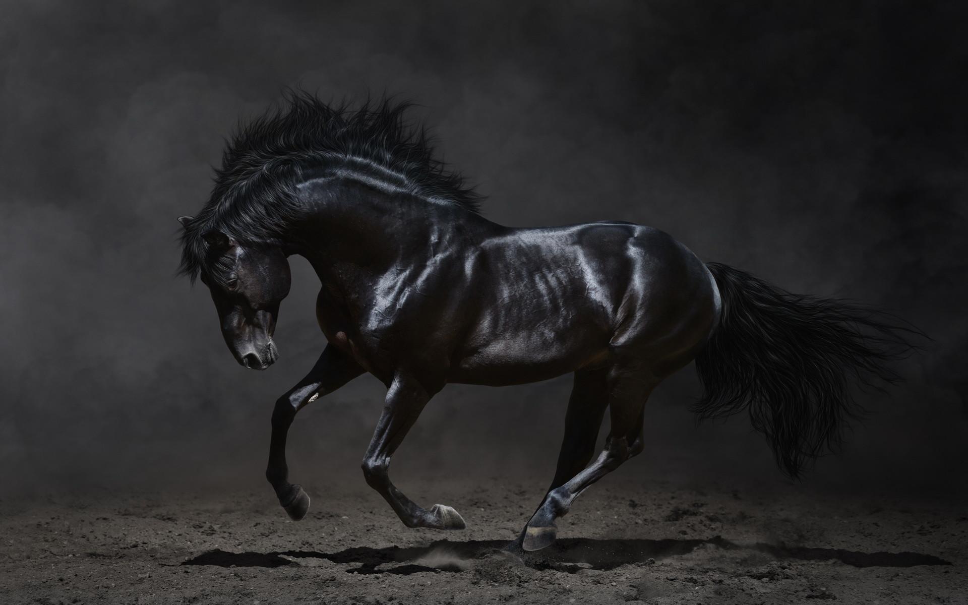 Horse Desktop Wallpaper 62 Pictures