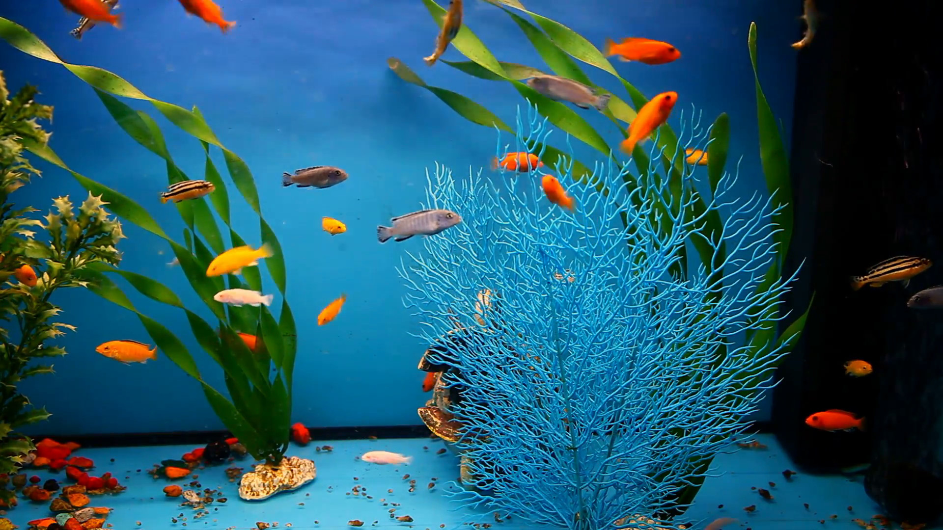 Aquatic Backgrounds 44 Pictures