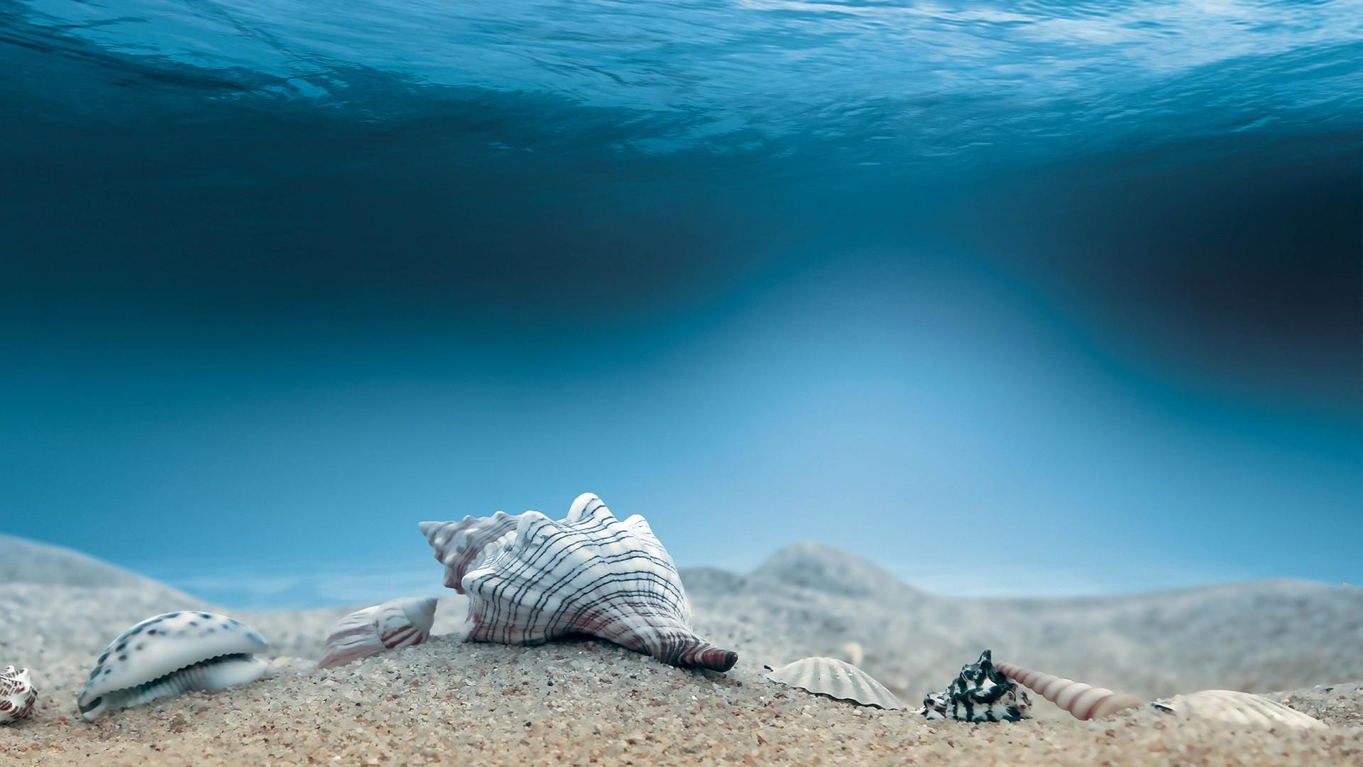Underwater Wallpapers 70 Pictures