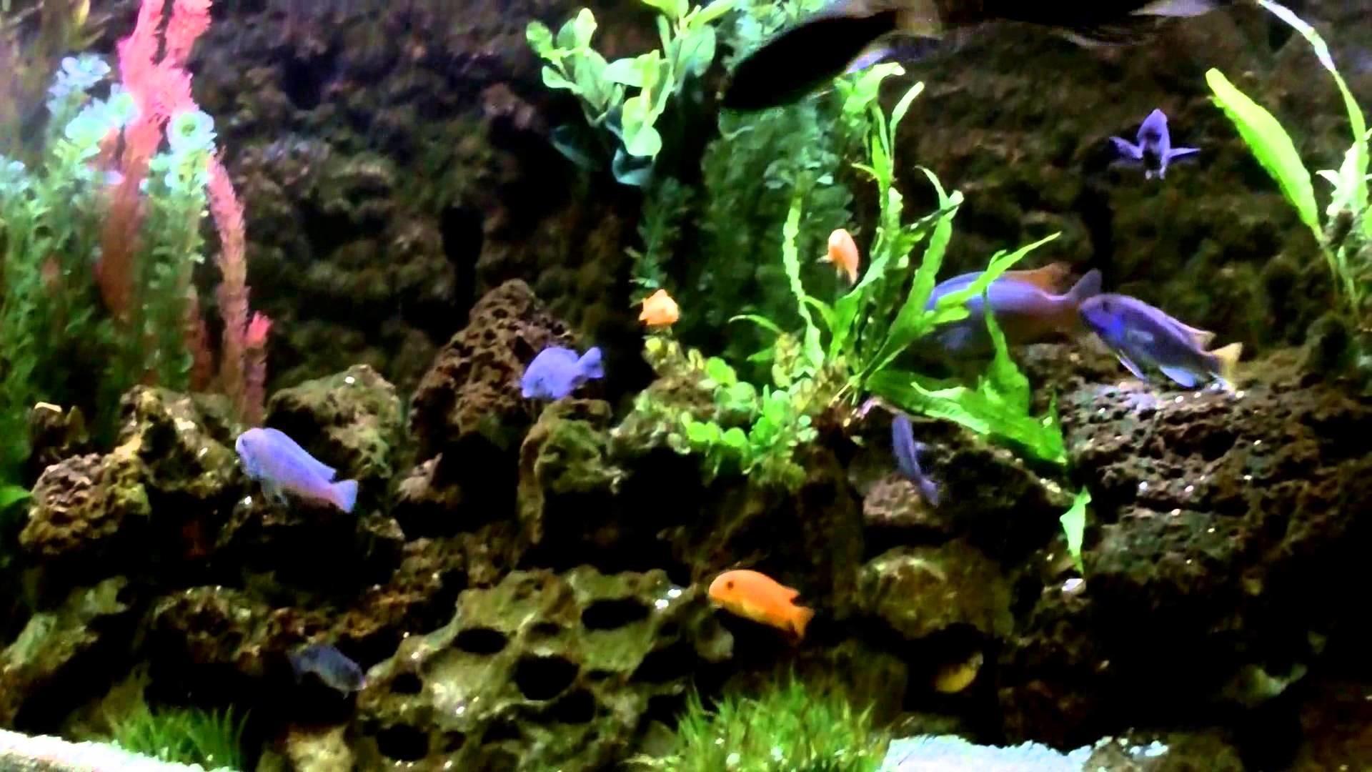 Aquarium Background Pictures (55+ pictures)