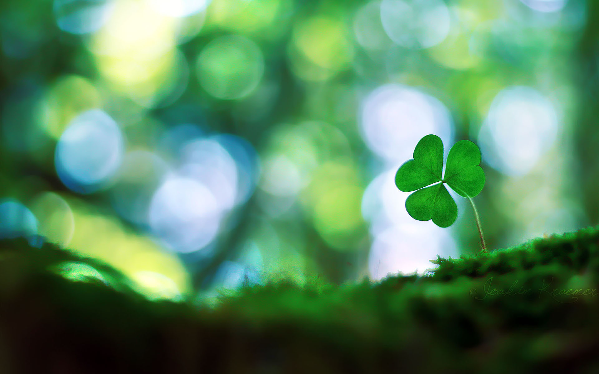 Four Leaf Clover Wallpapers (51+ pictures)