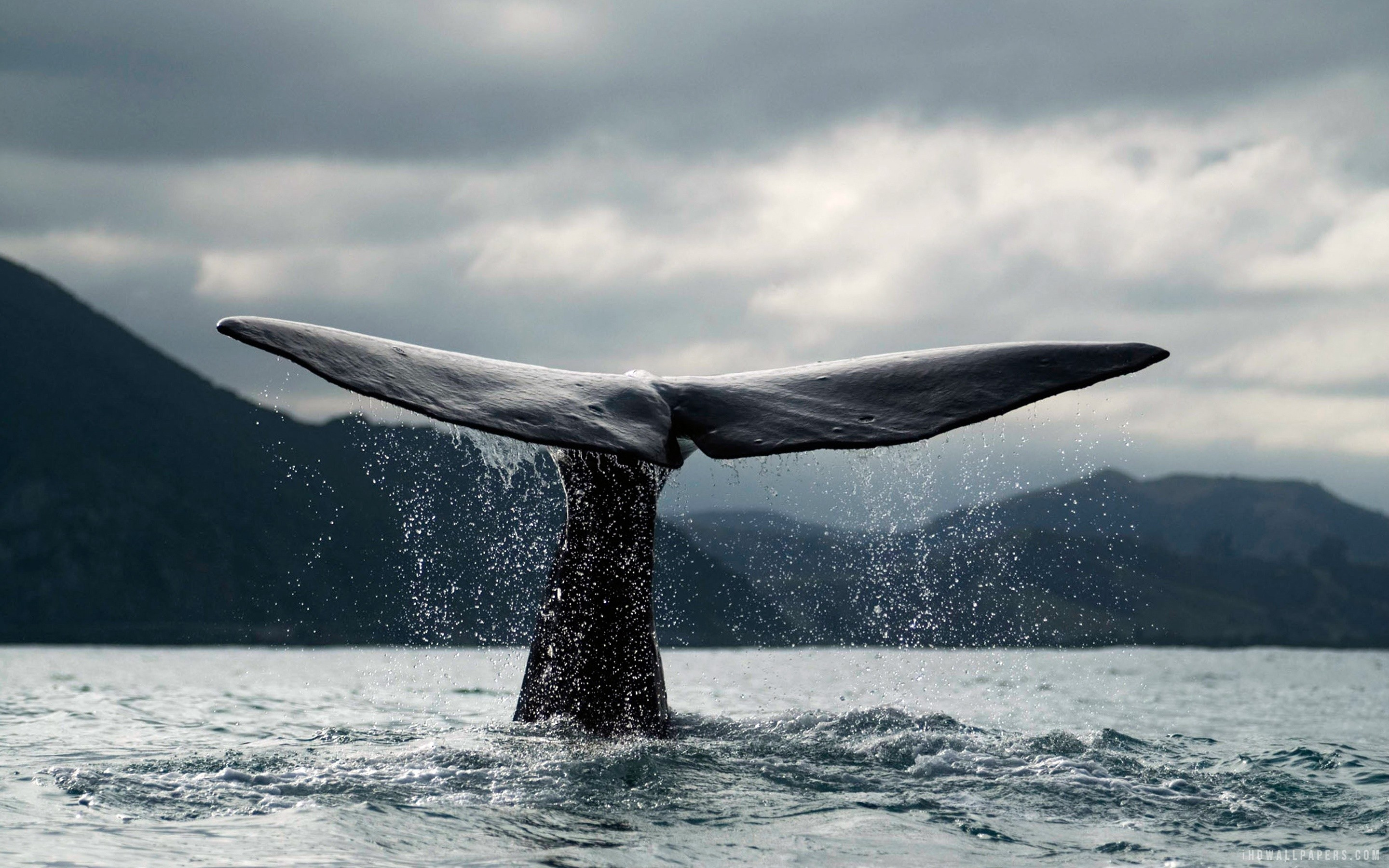 Whale Iphone Wallpaper 543343 Source Orca 6 The Galleries Of HD