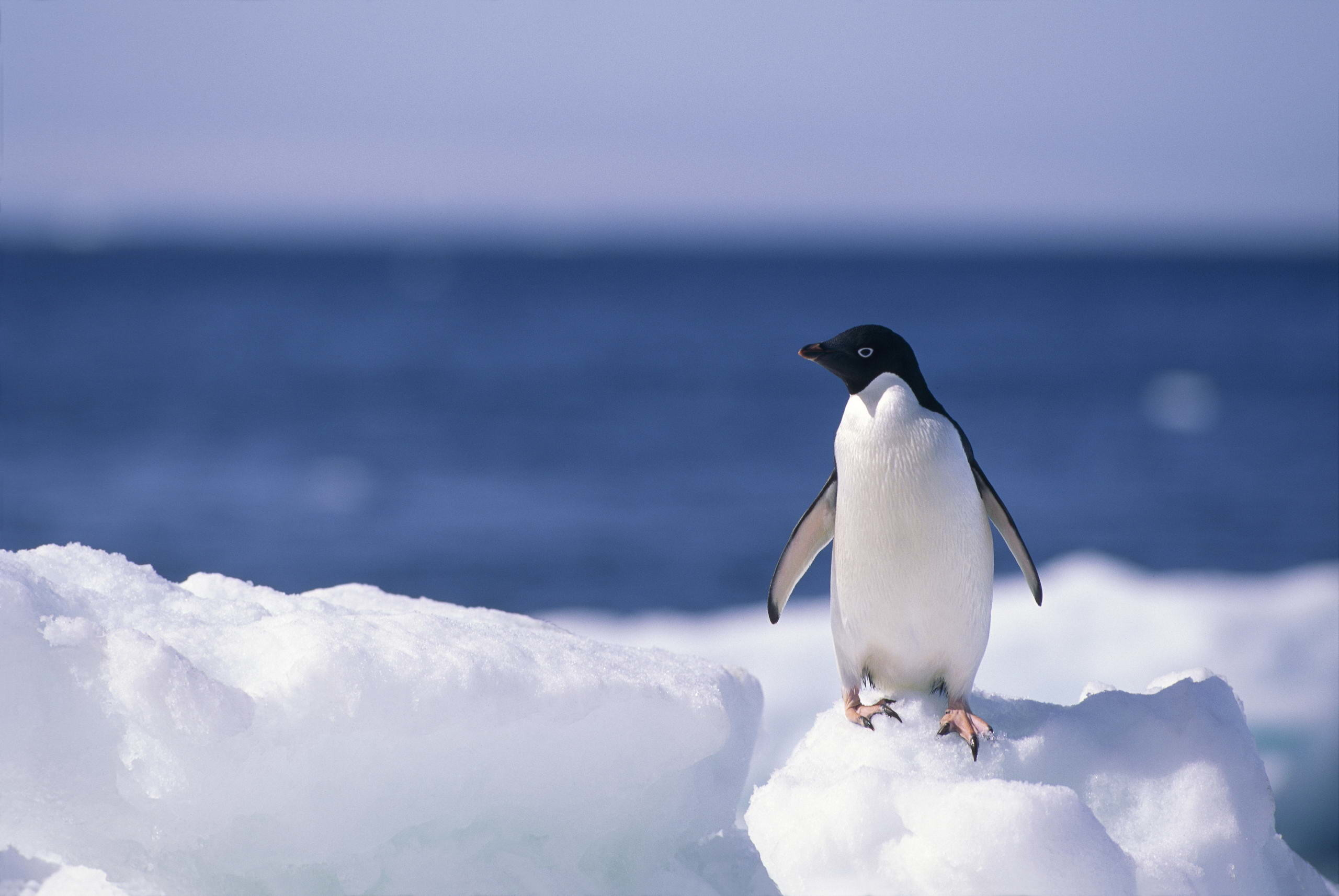 Cute Penguin Backgrounds 48 Pictures