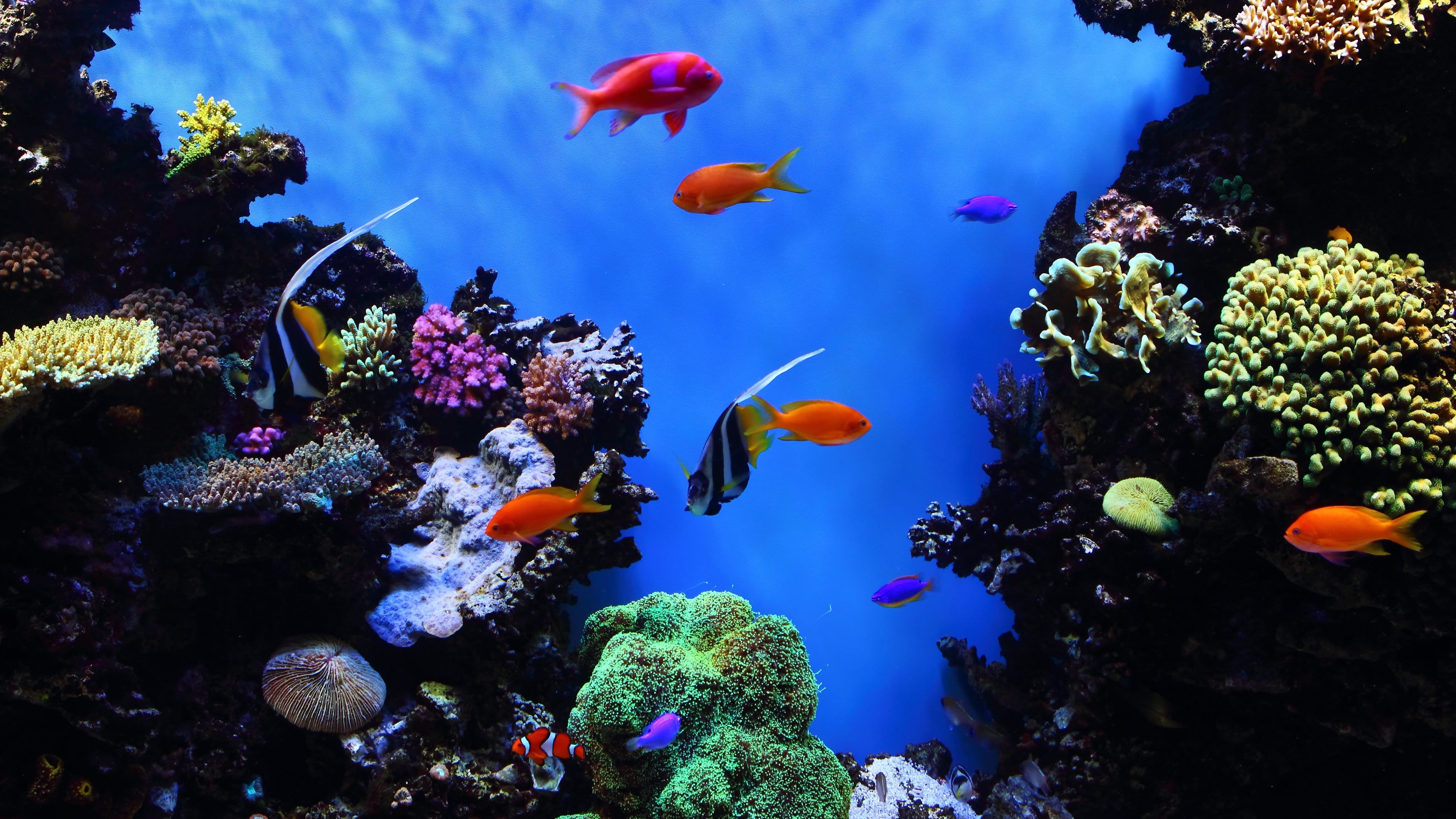 Tropical fish backgrounds 63 pictures - Underwater wallpaper for pc ...