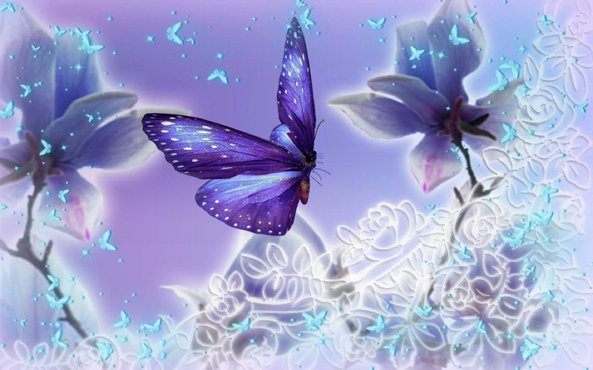 Butterfly Backgrounds 70 Pictures