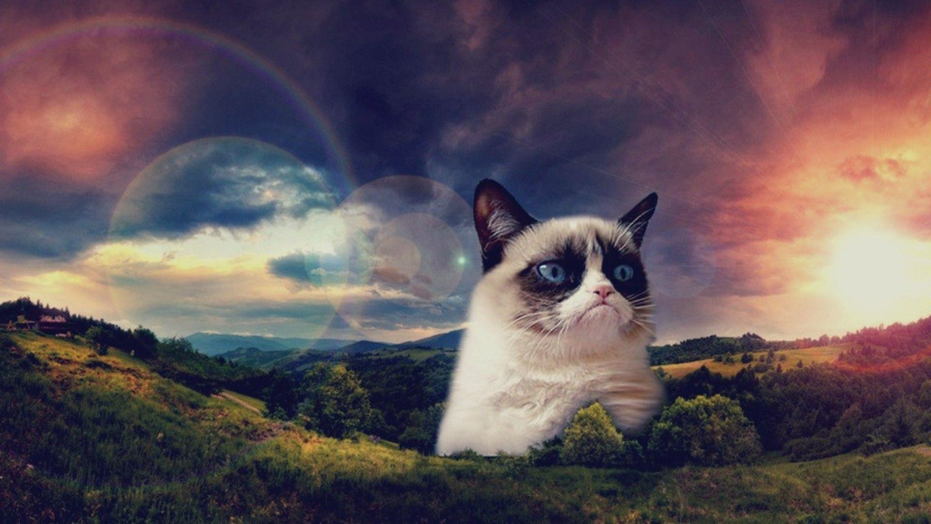 1920x1080 Cool Cat Backgrounds - Wallpapers Browse 1920x1080