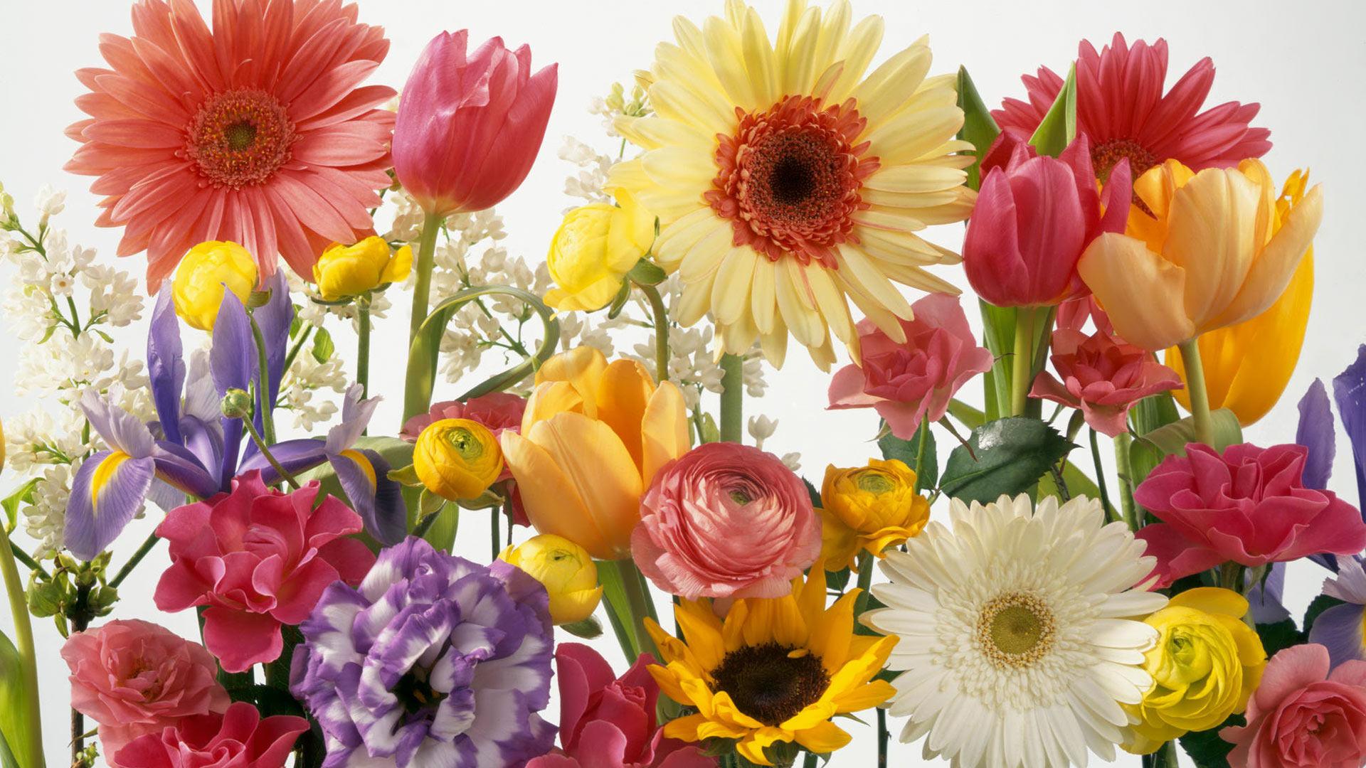 Spring Flower Desktop Background 54 Pictures