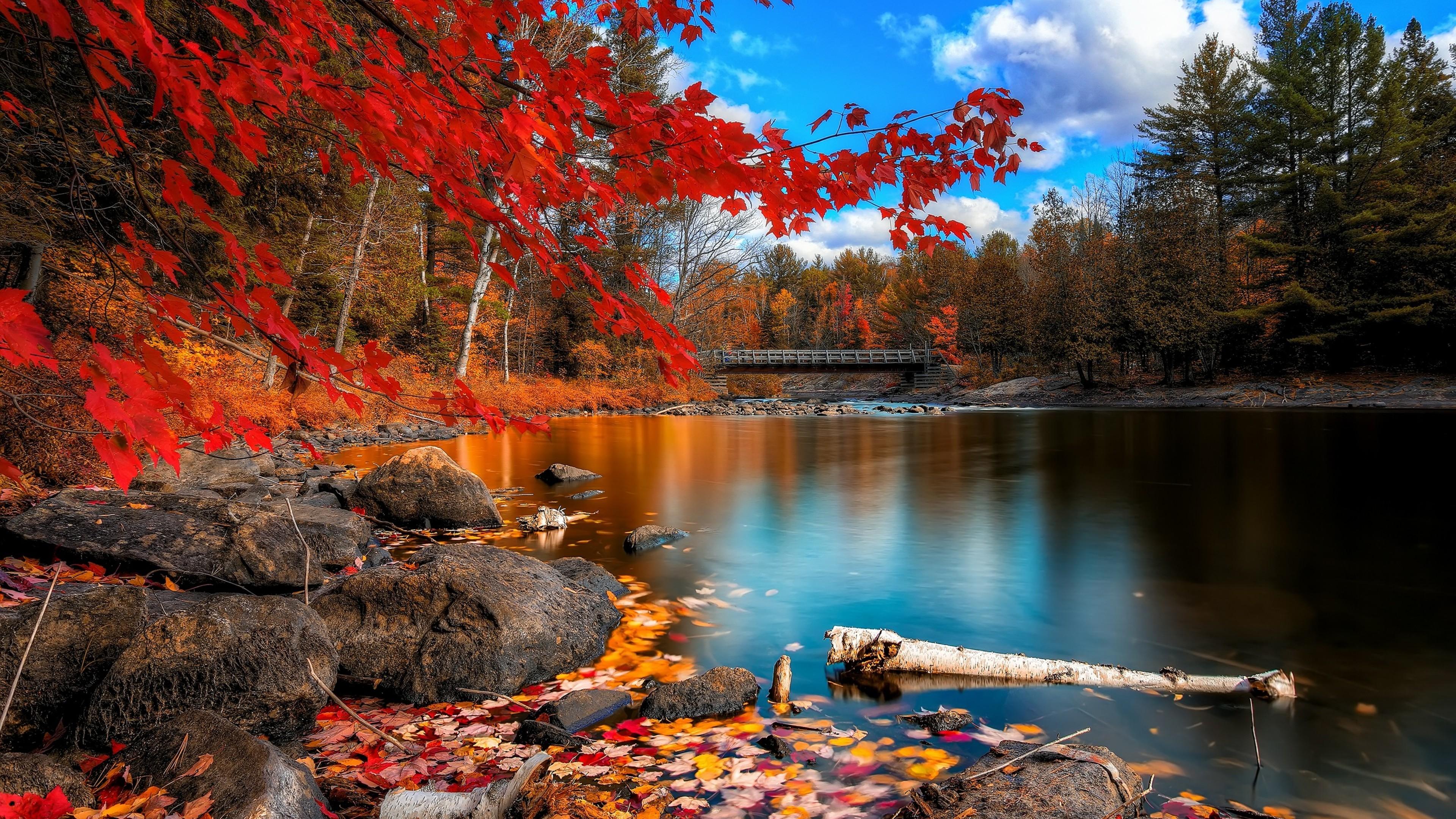Fall Colors Desktop Wallpaper 57 Pictures
