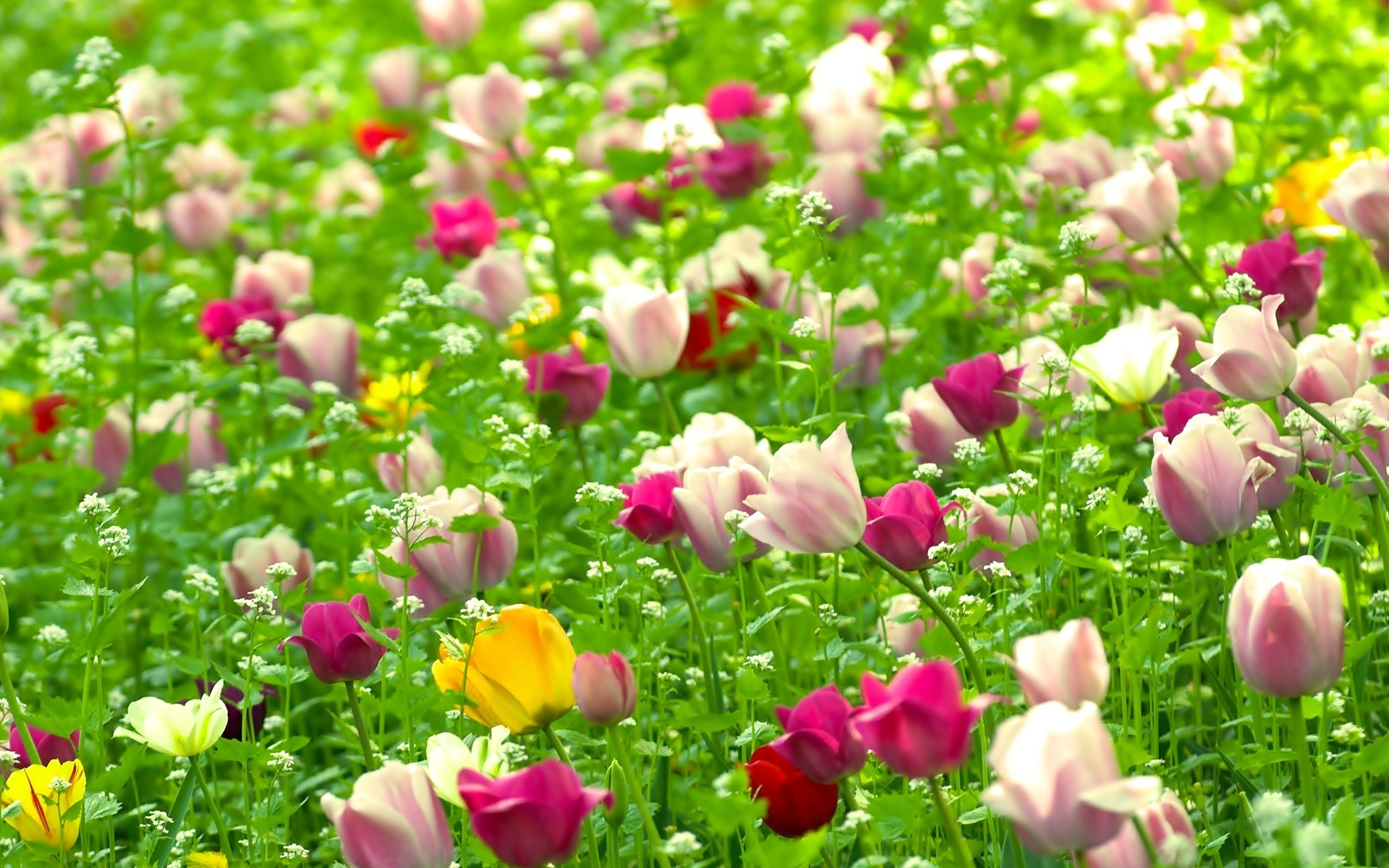 Nature Flower Wallpaper 52 Pictures