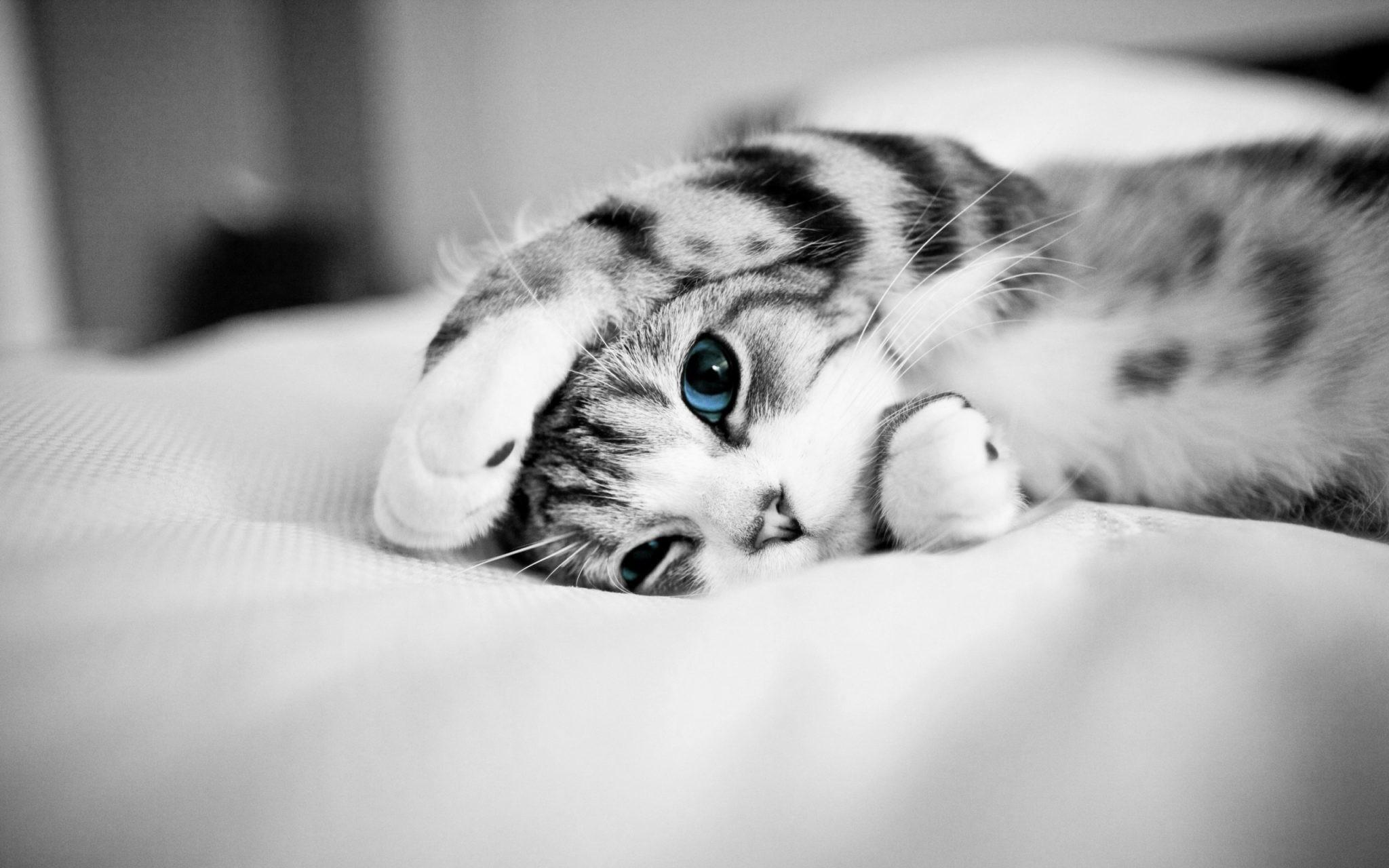 Cute Cat Wallpaper 71 Pictures