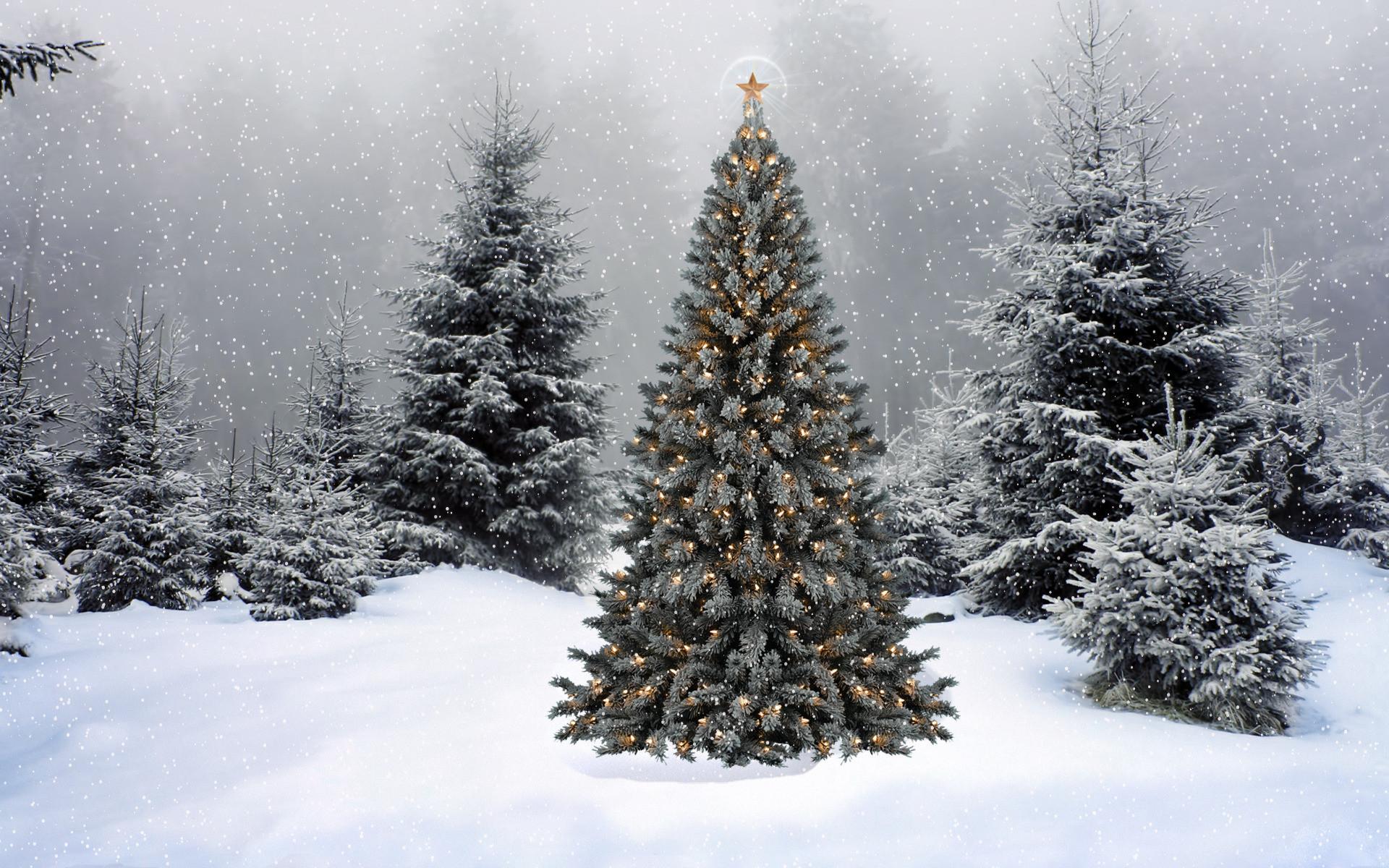Christmas Tree Desktop Backgrounds 64 Pictures