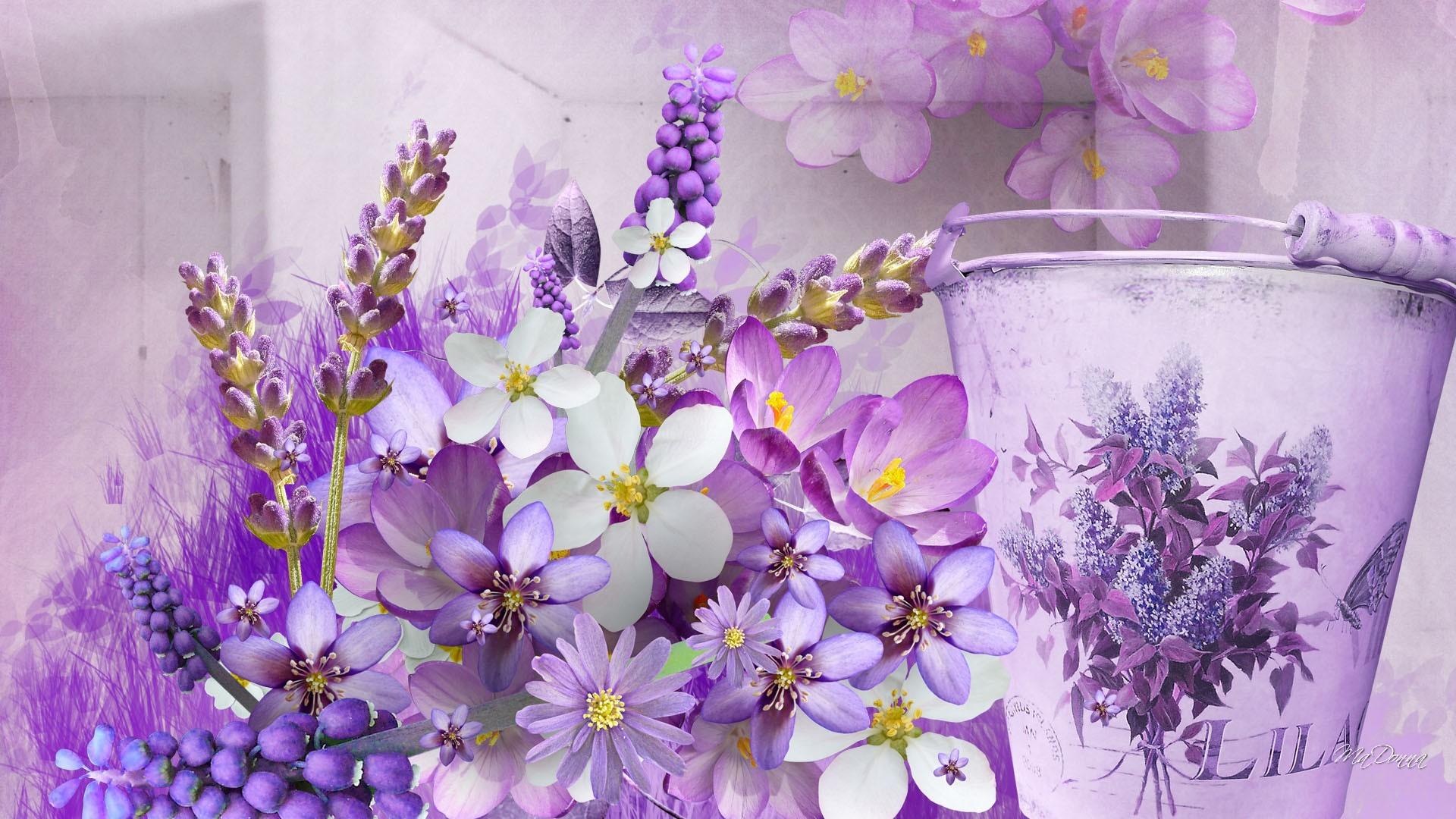 Lavender Flower Wallpaper (70+ pictures)