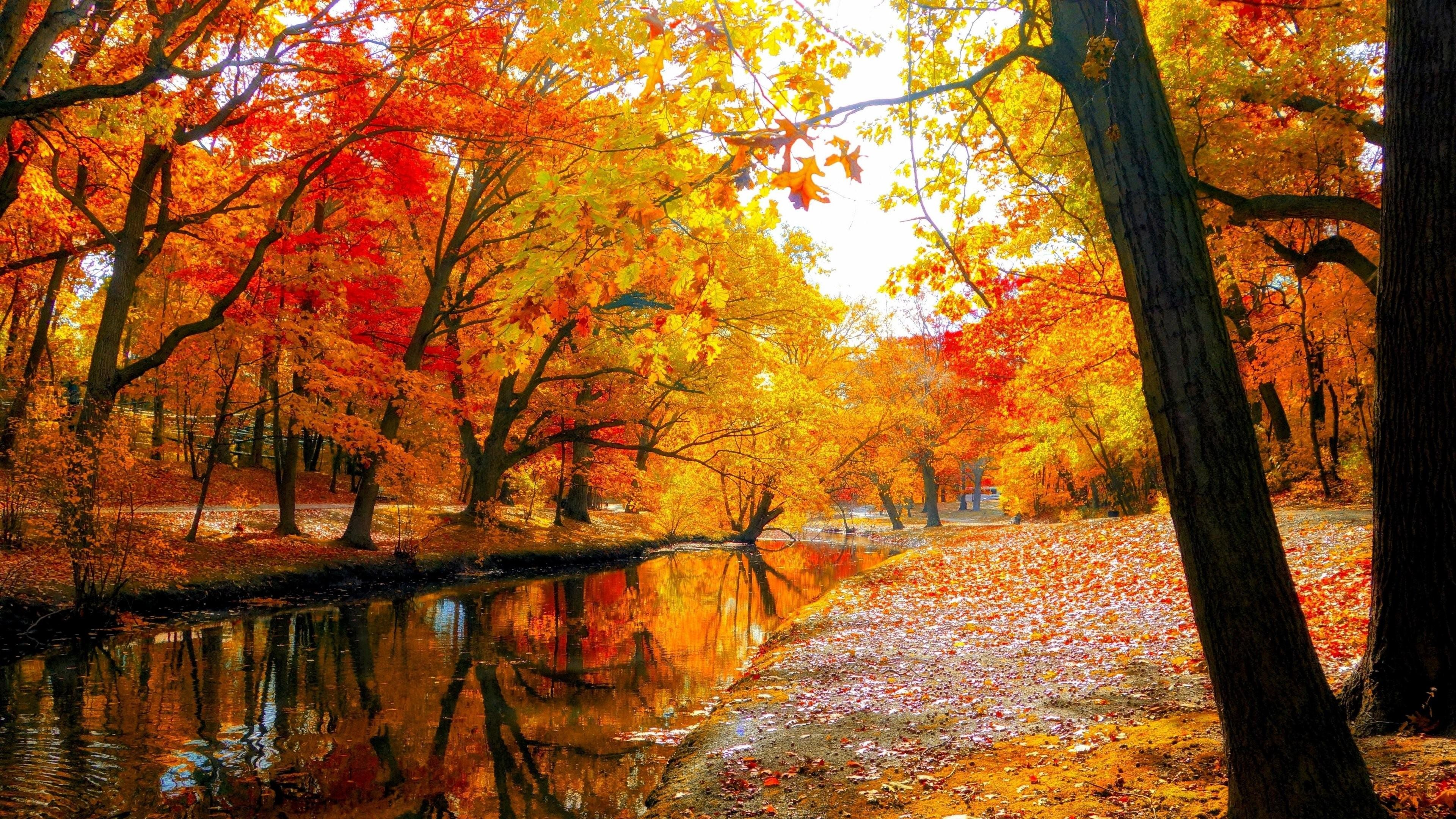 Autumn Tree Wallpaper 73 Pictures