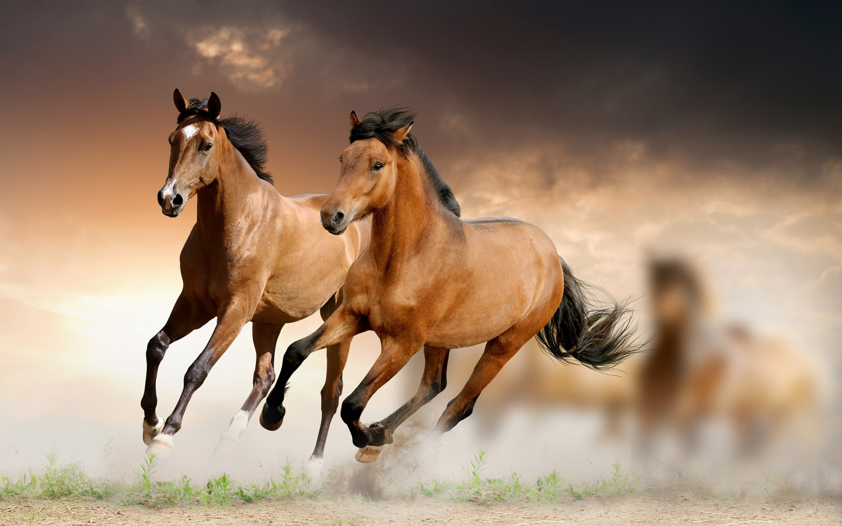 Wallpaper Horses 71 Pictures