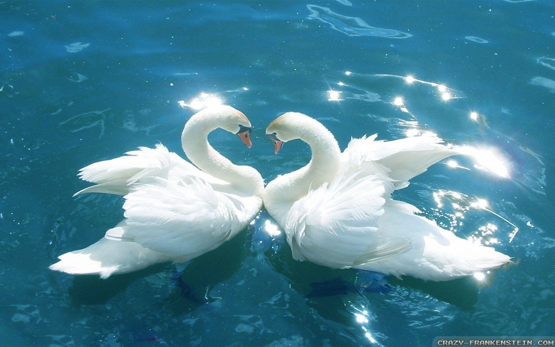 Love Bird Wallpapers 45 Pictures