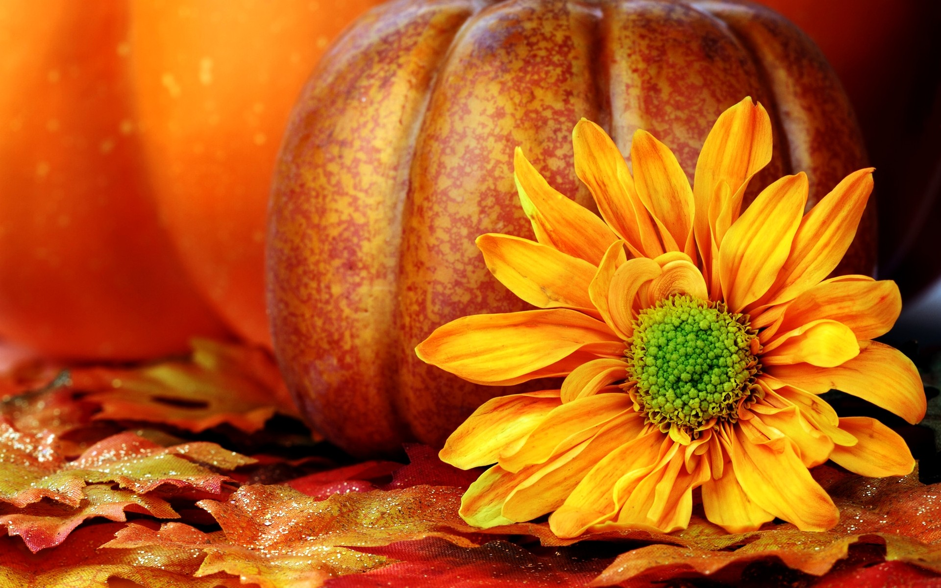 Fall Pumpkin Wallpaper 56 Pictures