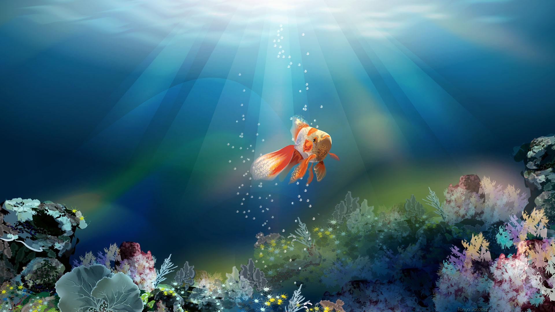 Fish Desktop Wallpaper 57 Pictures