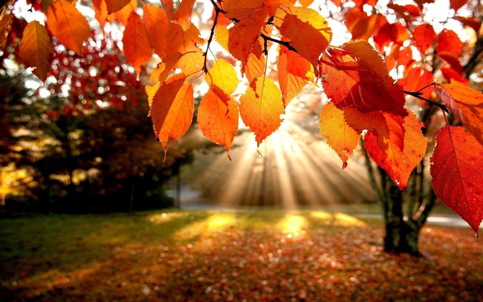 Fall Leaves Wallpaper Desktop 60 Pictures