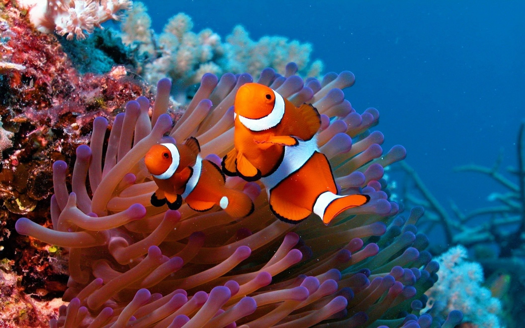 Sea Life Wallpaper 56 Pictures