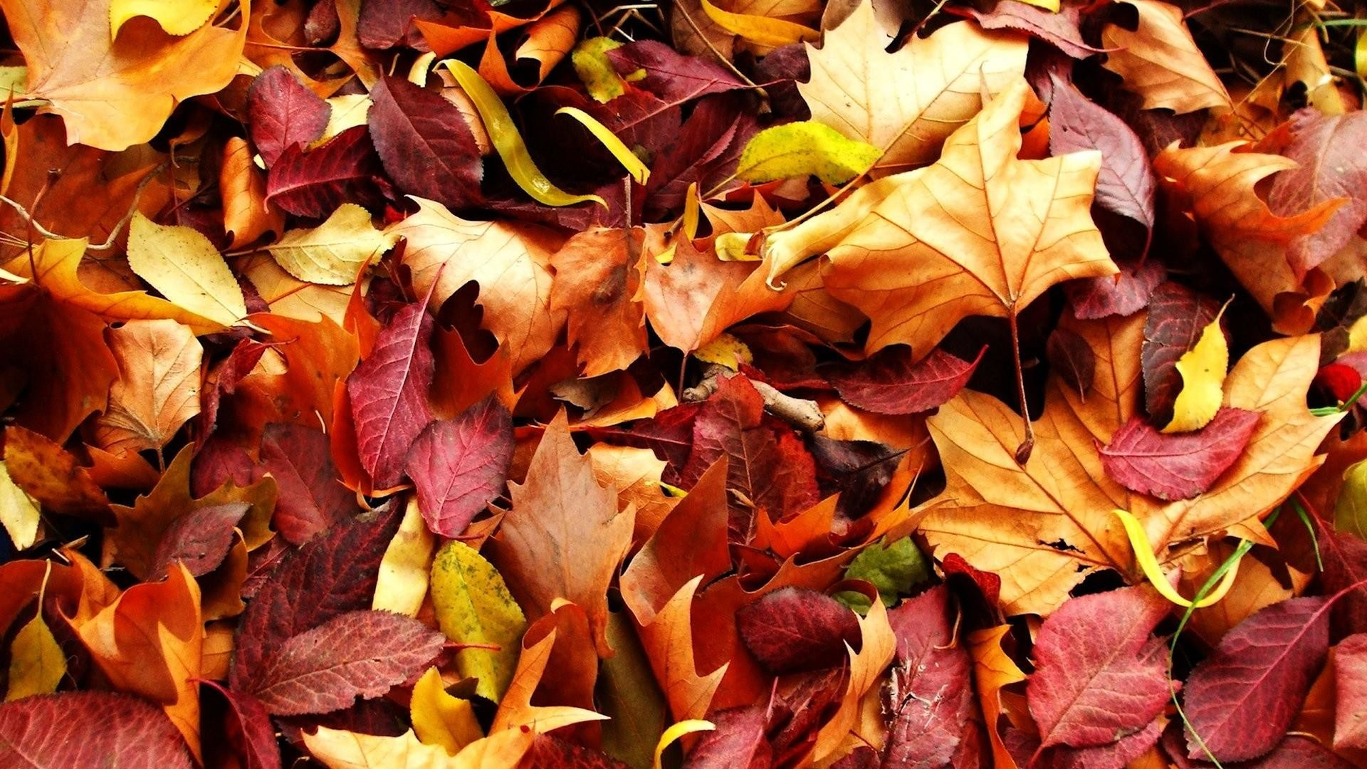 Fall Leaves Wallpaper 67 Pictures