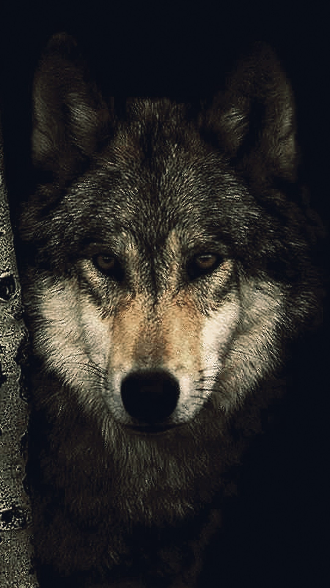 Wolf Wallpapers (80+ pictures)