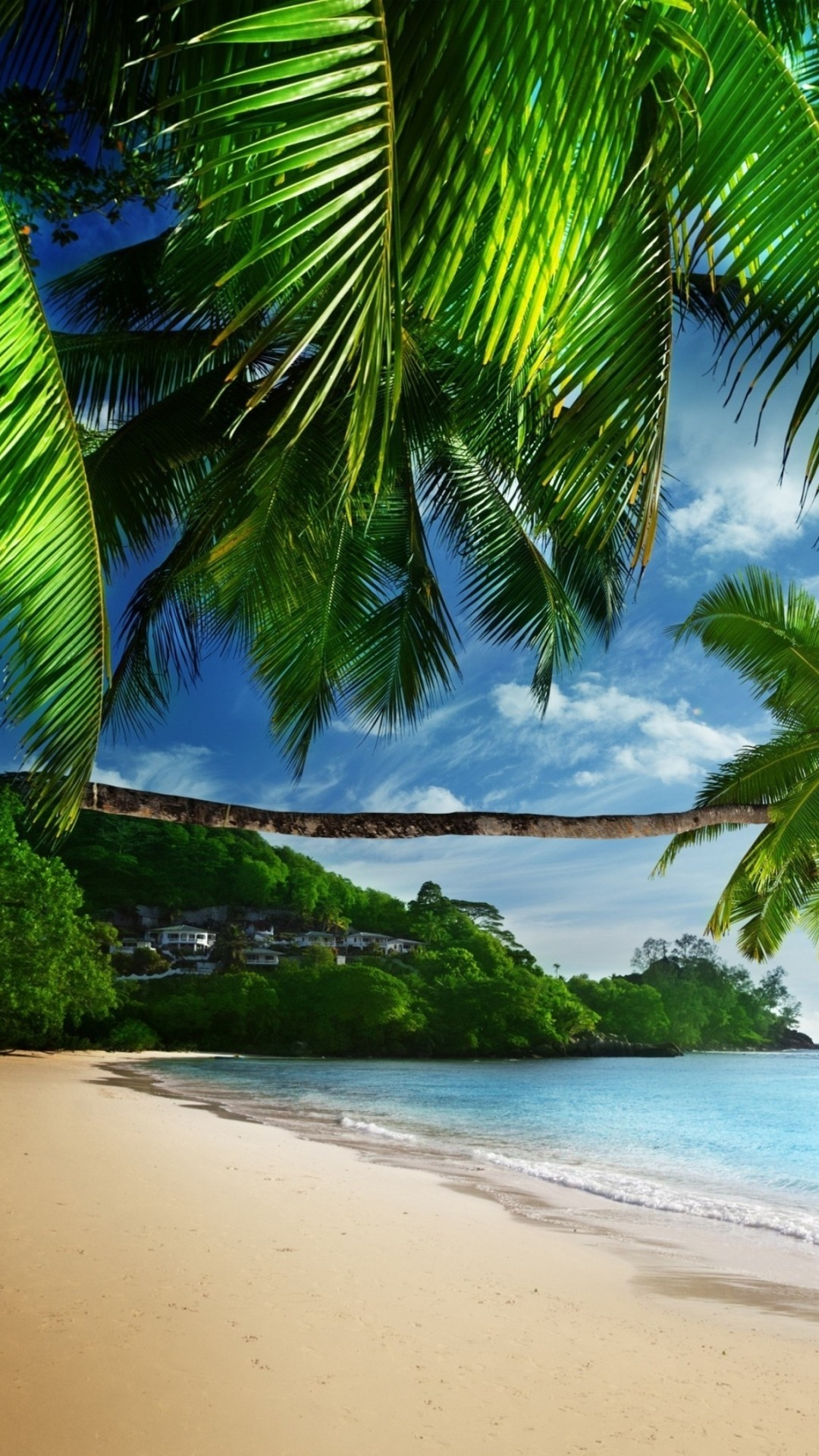 Wallpaper tropical 61 pictures - Palm tree wallpaper for android ...