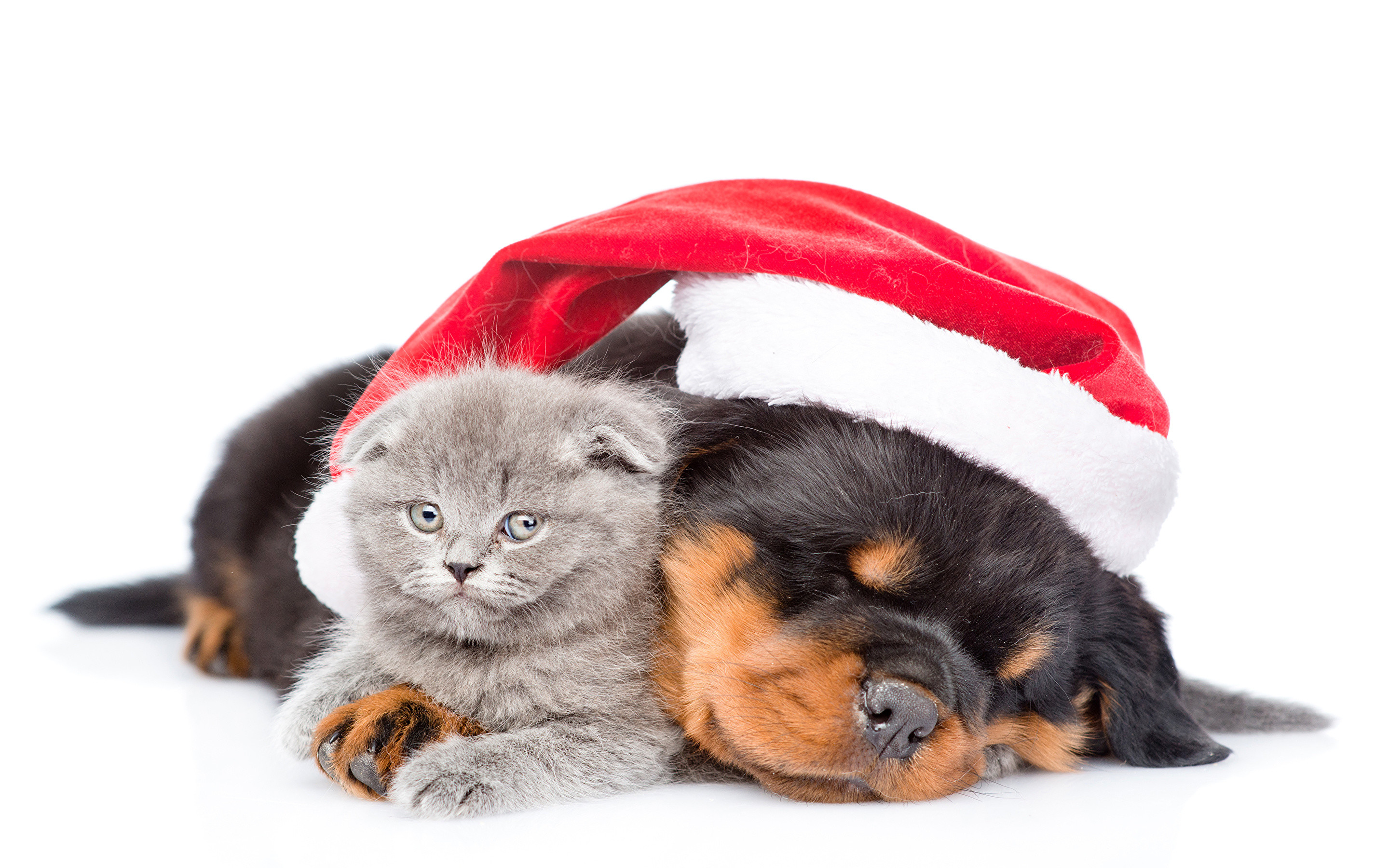Christmas Kitten Wallpaper 67 Pictures
