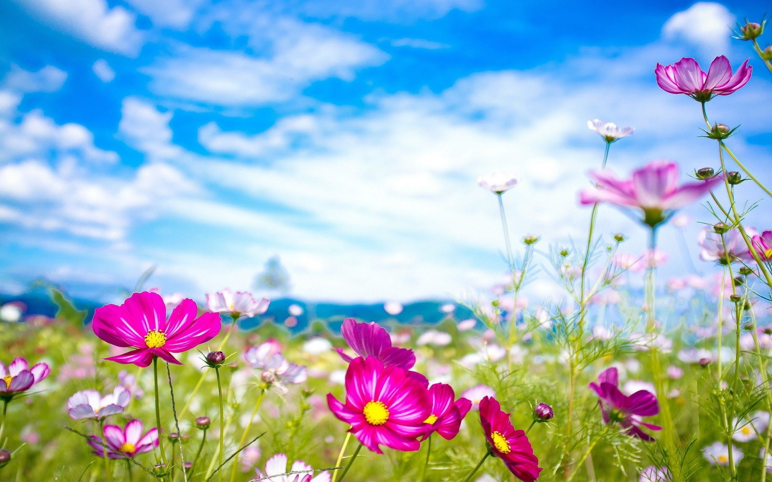 Summer Flower Backgrounds 54 Pictures