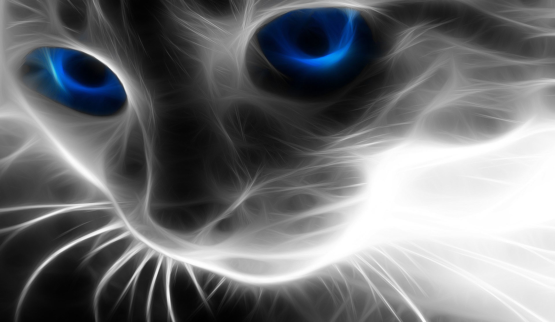 Cool Effected Cat Wallpaper Wallpaper HD 1920x1116