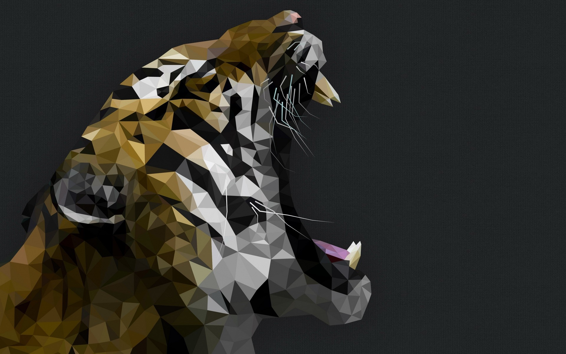 Wallpapers Of Tigers 62 Pictures