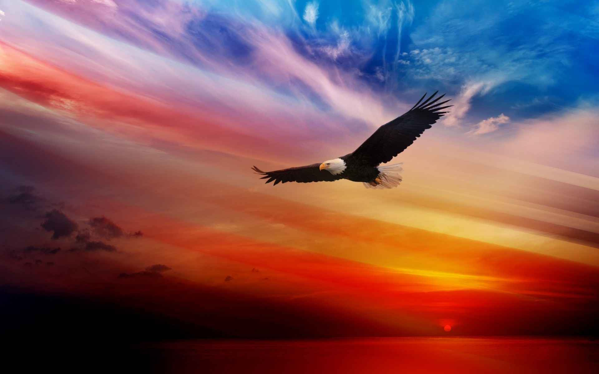 American Bald Eagle Wallpaper 58 Pictures