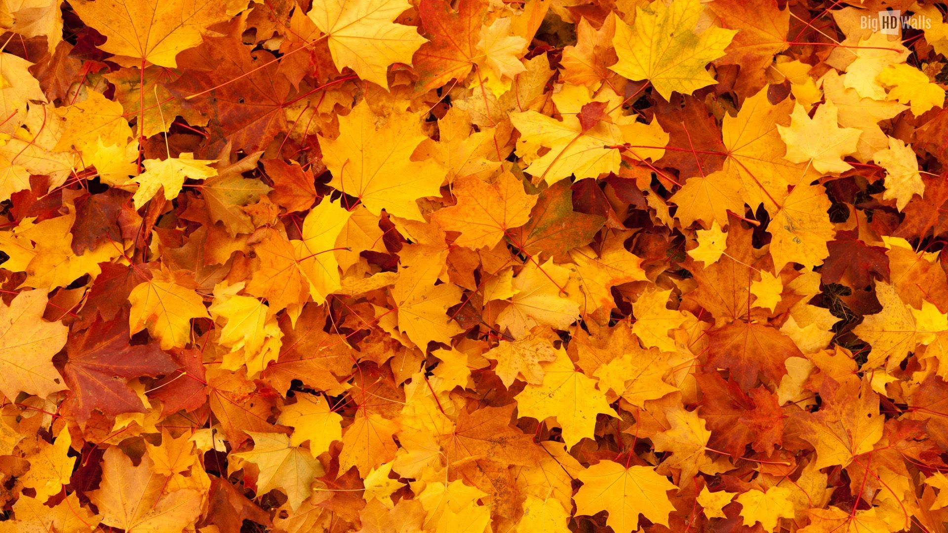 Fall Thanksgiving Wallpaper 62 Pictures
