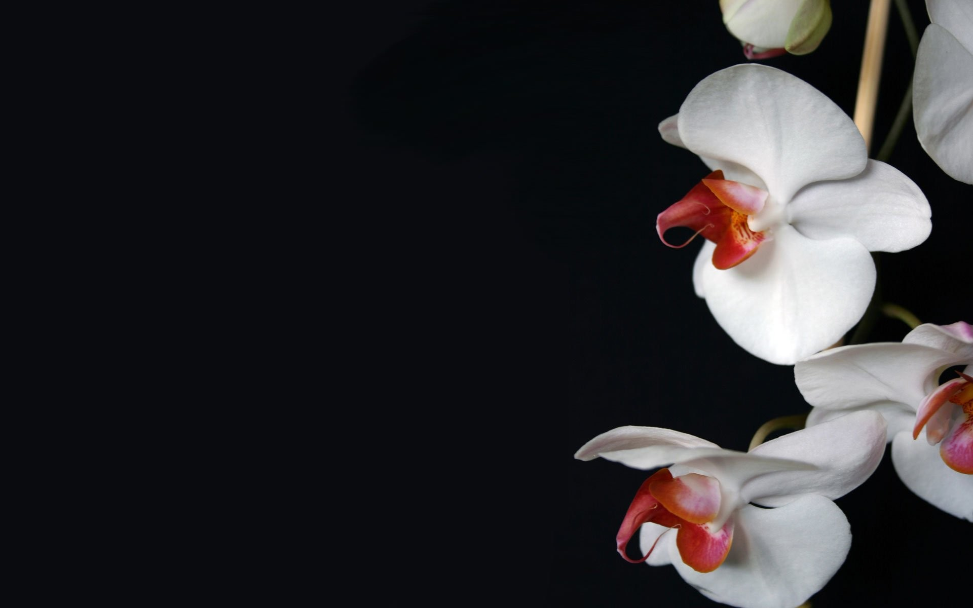 white orchid wallpaper 58 pictures