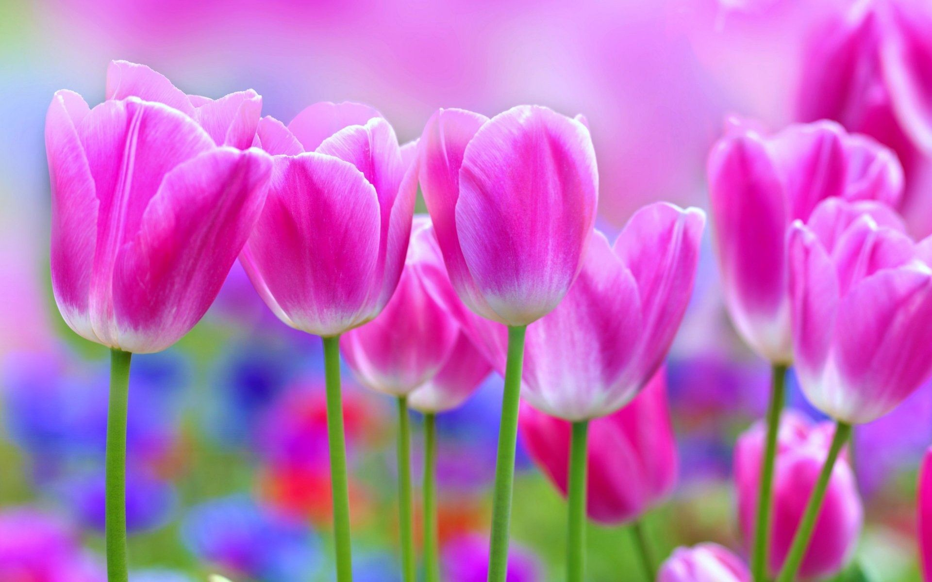 Pretty Flowers Wallpaper 46 Pictures