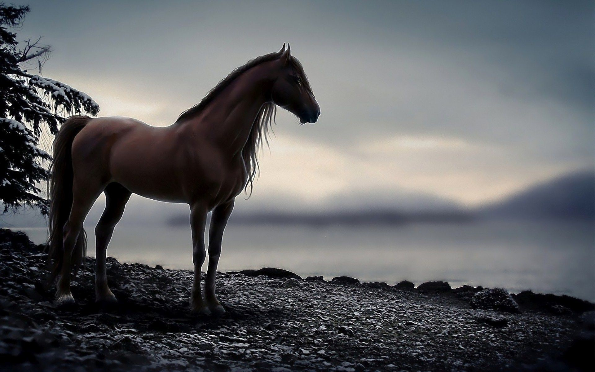Wallpaper Horse 70 Pictures