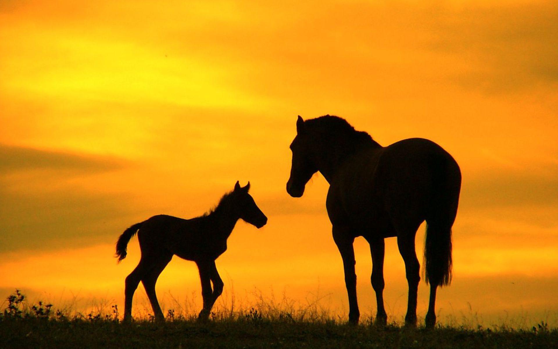 Wild Horse Wallpaper (66+ pictures)
