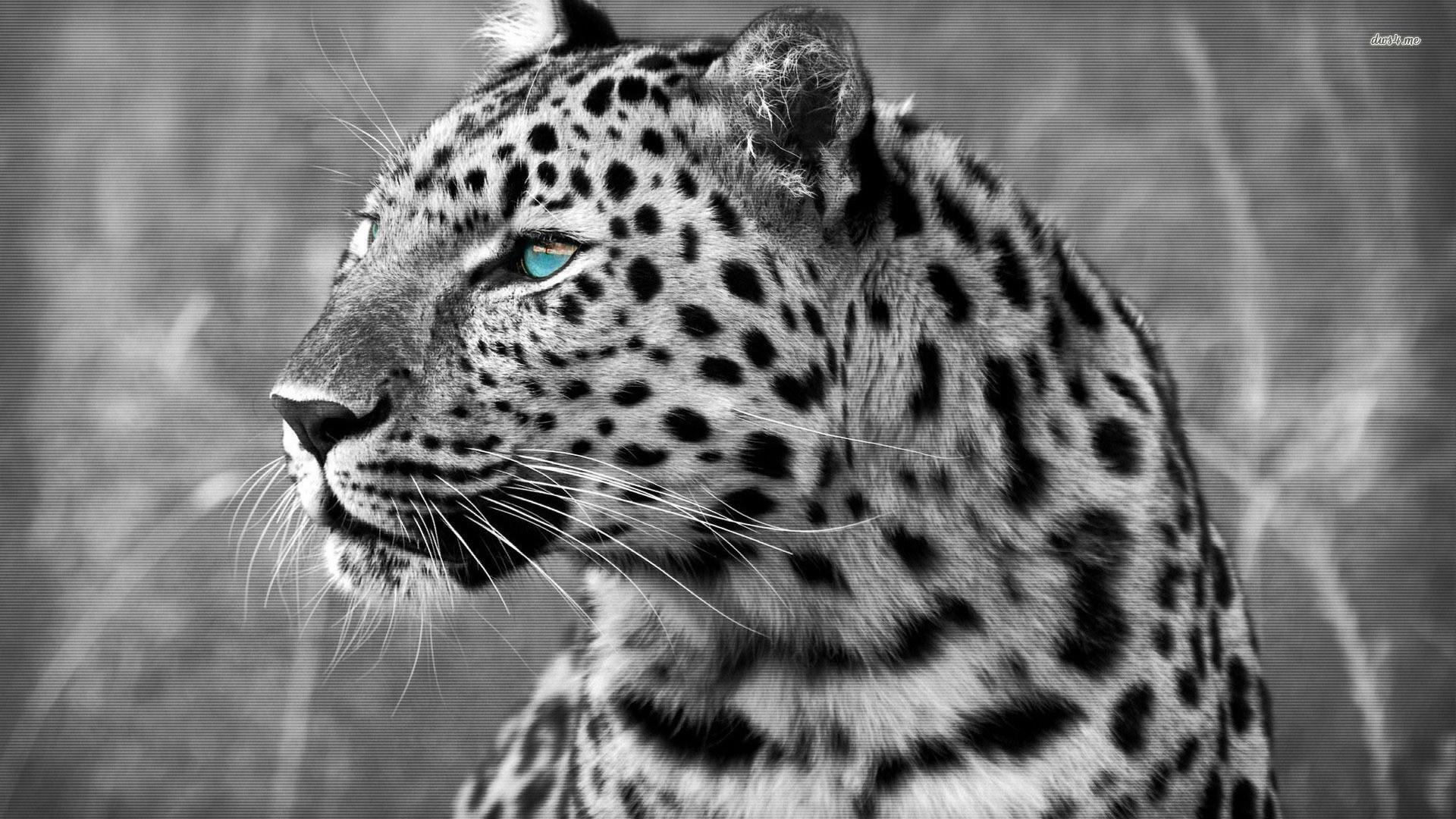 Leopard Wallpaper (78+ Pictures
